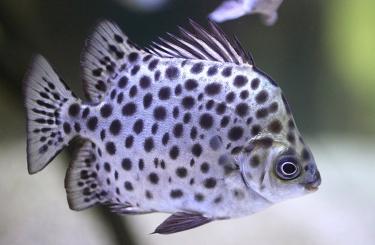 Рыбы эстуарий